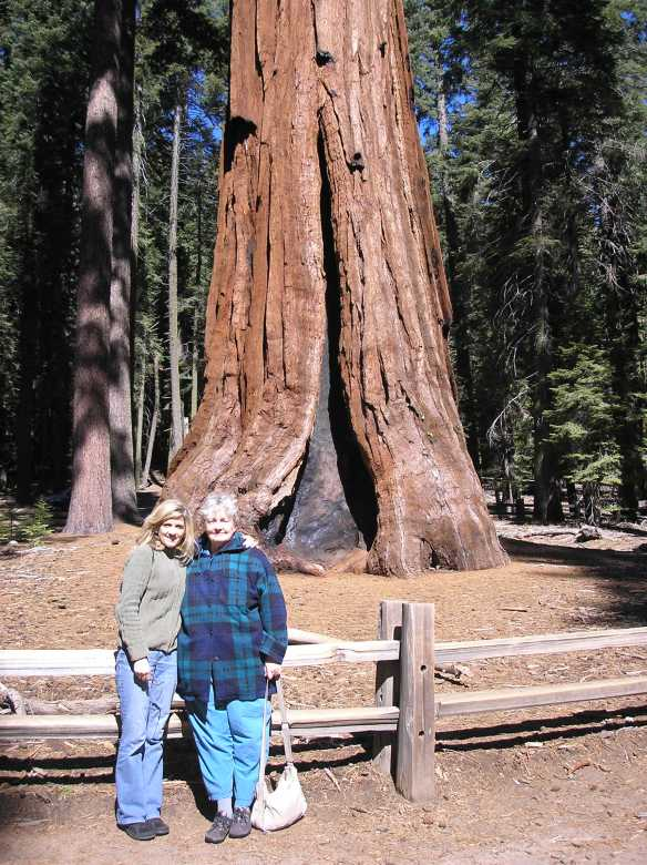 Hilary, Mom and a big sequoia tree