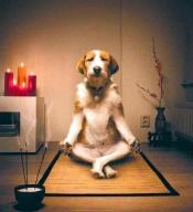 Content dog meditating