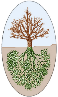 Ashvattha Tree 1